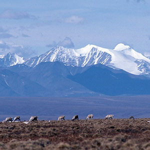 In Defense of the Arctic Refuge