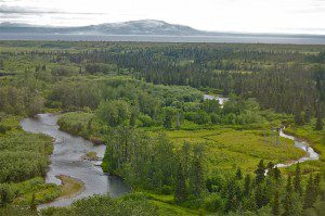 Upper Talarik Creek in Bristol Bay. Photo Courtesy of Dr. Carol Ann Woody.