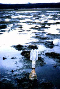 An unexploded bomb sits on top of the wetlands in the Eagle River estuary. Army Corps of Engineers photo.