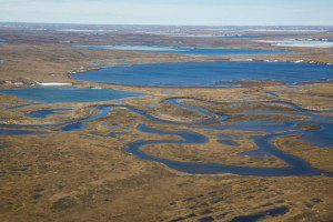 The Western Arctic or NPRA provides habitat for migratory birds.