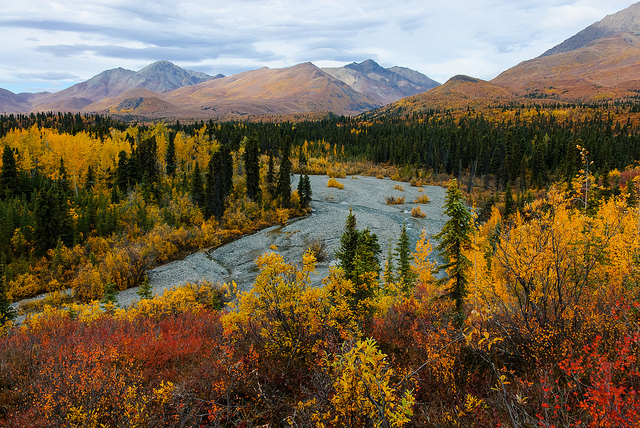 Fall colors in Wrangell-St. Elias National Park. NPS Photo by Bryan Petrtyl.