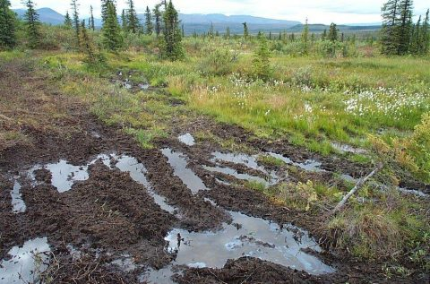 ORV tracks clearly showing an oil sheen near the Tanana River. Photo courtesy of NPCA.