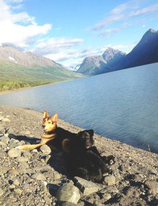 Chewy and Raven get a breather at Eklutna Lake.