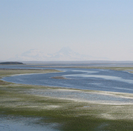 We're taking Trump to court. Again. To protect Izembek Wildlife Refuge.