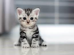 Tracy wants a kitten.