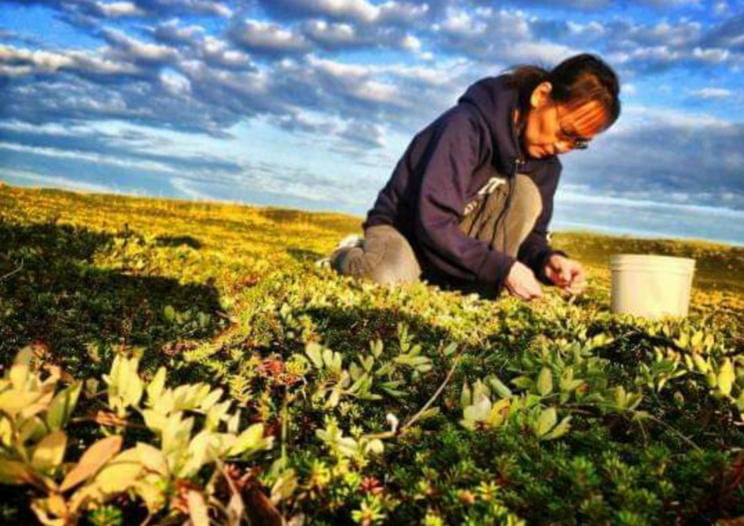 When you take care of the land, the land takes care of you. Here, Fannie picks berries under blue skies and while amidst fall colors.